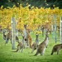 margaret-river-winery